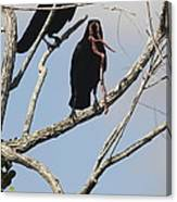 Two Raven With A Snake Canvas Print