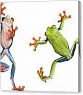 Two Red Eyed Tree Frogs Canvas Print