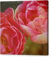 Two Red Tulips Canvas Print