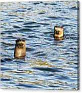 Two River Otters Canvas Print