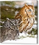 Two Screech Owls Canvas Print