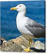 Two Seagull Canvas Print