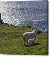 Two Sheep On The Cliffs At Sleive League - Donegal Ireland Canvas Print