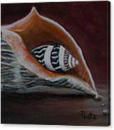 Two Shells Canvas Print