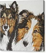 Two Shelties Canvas Print