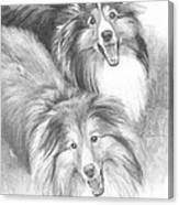 Two Shelties Pencil Portrait Canvas Print