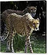 Two Sisters Hunting Canvas Print