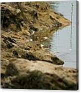 Two Spotted Sandpipers On The Flint Rivers Banks Canvas Print