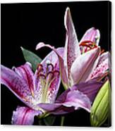 Two Star Lilies Canvas Print