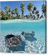 Two Stingrays 1 Canvas Print