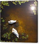 Two Swans With Sun Reflection On Shallow Water Canvas Print