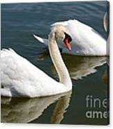 Two Swimming Swans Canvas Print