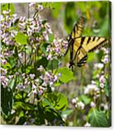 Two Tailed Swallowtail Canvas Print