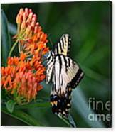 Two-tailed Swallowtail Canvas Print