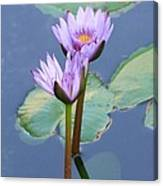 Two Tall Water Lilies Canvas Print