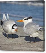 Two Terns Talking Canvas Print