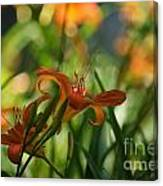 Two Tiger Lillies...   # Canvas Print
