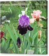 Two Tone Iris Canvas Print