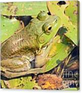 Two Toned Frog Canvas Print
