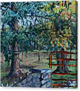 Two Trees And A Gate Canvas Print