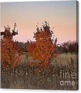 Two Trees At Sunset Canvas Print