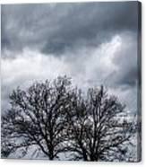 Two Trees Beneath A Dark Cloudy Sky Canvas Print