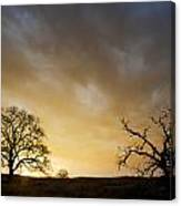 Two Trees Greeting The Sun Canvas Print