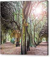 Two Tunnels Taxus Canvas Print