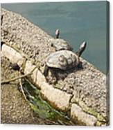 Two Turtles Canvas Print