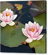 Two Water Lillies Canvas Print