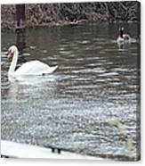 Two Waterfowl Canvas Print