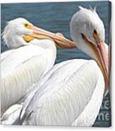 Two White Pelicans Canvas Print