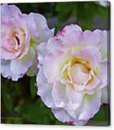 Two White Roses Border Canvas Print