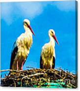Two White Storks 16 Canvas Print