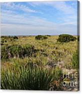 Tybee Island Dunes And Path Canvas Print