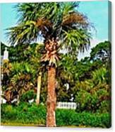 Tybee Palm Canvas Print