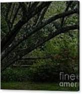 Tyler Tree 1 Canvas Print