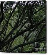 Tyler Tree 2 Canvas Print