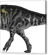 Tyrannosaurus Rex, A Large Predator Canvas Print