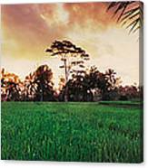 Ubud Rice Fields Canvas Print