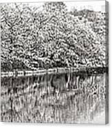 Ueno Park Sakuara Canvas Print