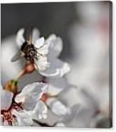 Ugly Pollinator Canvas Print