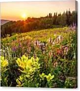 Uinta Wildflowers Canvas Print