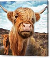 Uk, Scotland, Highland Cattle With Calf Canvas Print