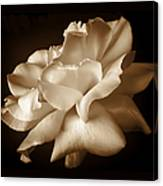 Umber Rose Floral Petals Canvas Print