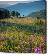 Umbria Wildflowers Canvas Print