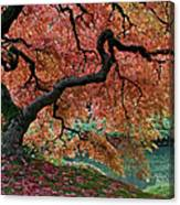 Under Fall's Cover Canvas Print