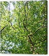Under Leaf Canopy Canvas Print