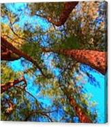Under The Australian Pines Canvas Print