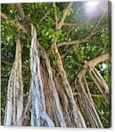 Under The Banyan Tree Canvas Print
